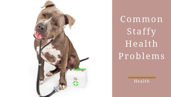 Common staffy health problems