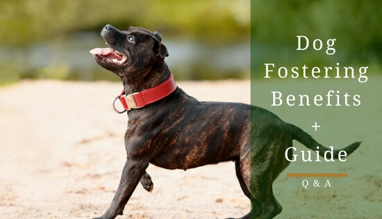 Dog Fostering Guide