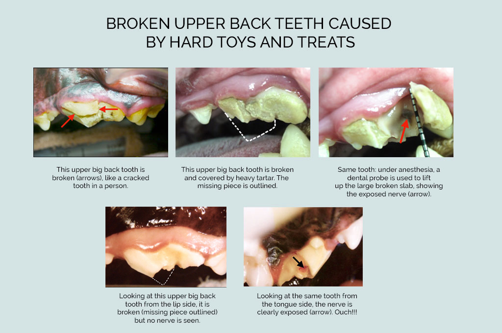 broken dog teeth image