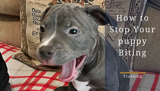how to stop a puppy biting