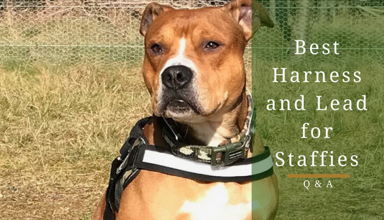 best dog harness and lead for staffies