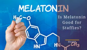 Melatonin for Staffies