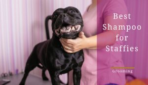 Best dog shampoo for staffies