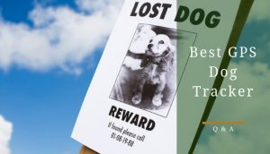 Best GPS Dog Tracker