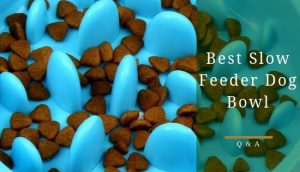 Best slow feeder dog bowl