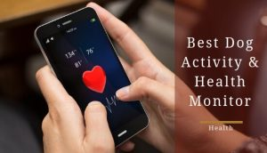 Best dog activity tracker and health monitor