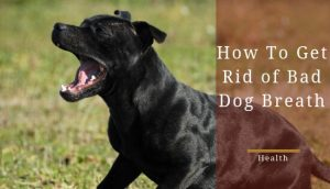 How to get rid of bad dog breath