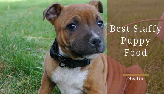 Best puppy food for staffies