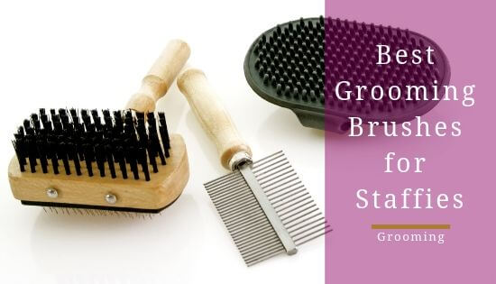 Best Brush for Staffies