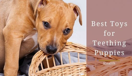 Best Toys for Teething Puppies