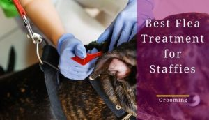 Best flea treatment for staffies